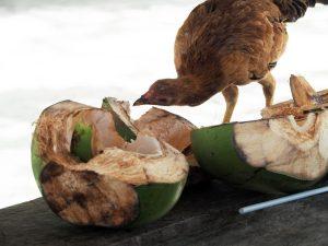 coconut-malcapuya-palawan