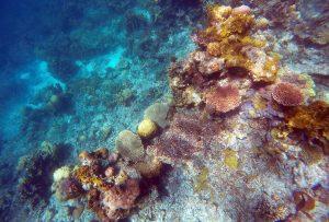 coral-garden-philippines