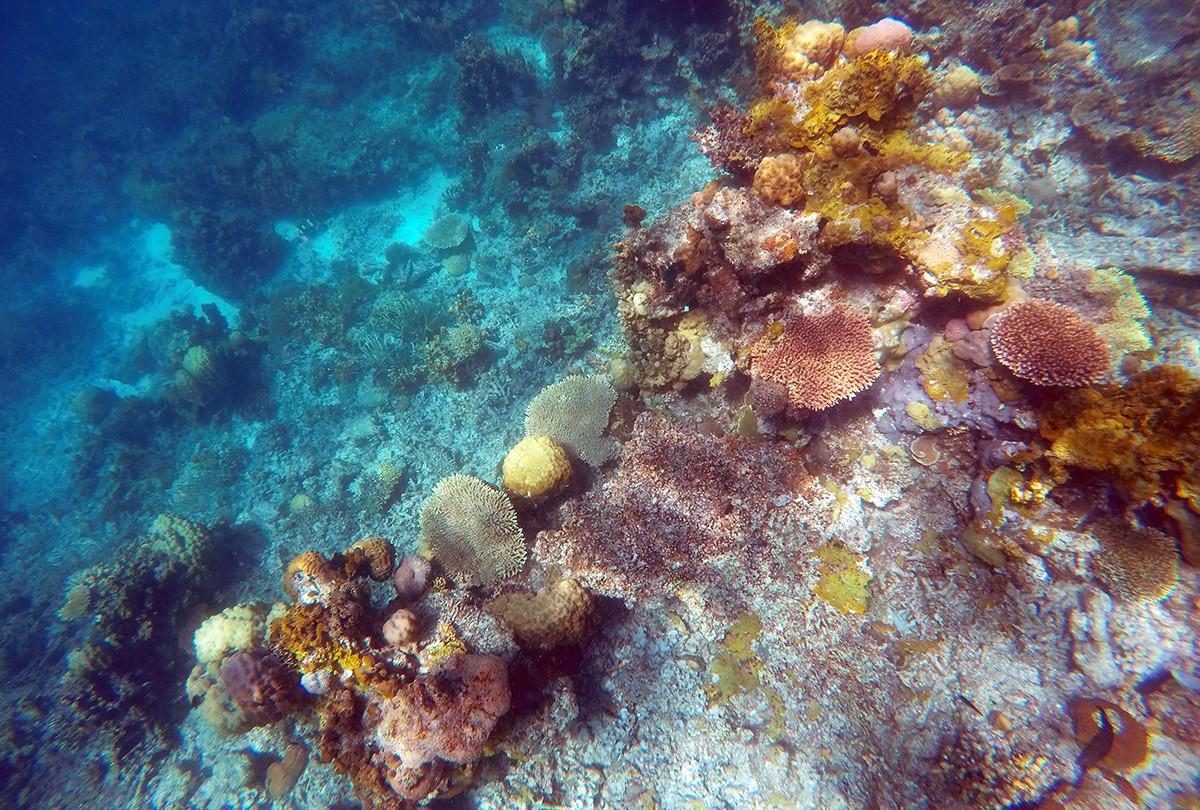 Coral garden diving - coron, Palawan