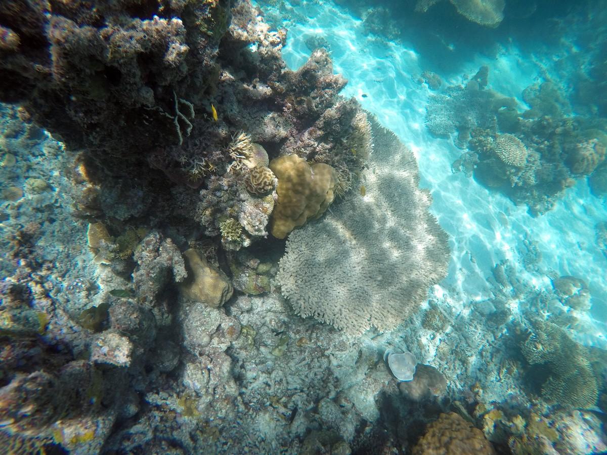 Snorkeling twin lagoon, Palawan
