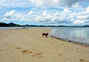 dog-on-the-beach-cheron-palawan