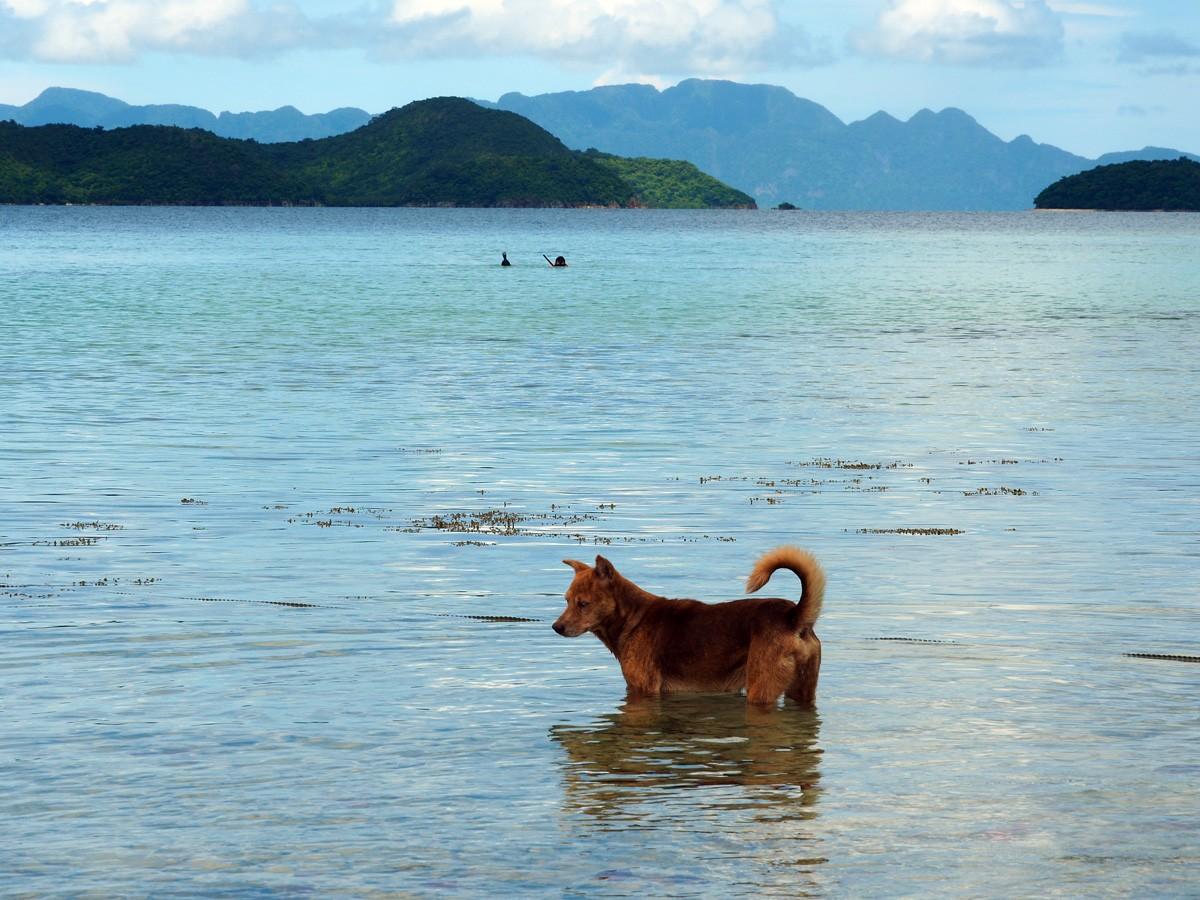 Cheron island snorkeling