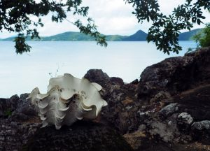 photo-shell-cheron-palawan
