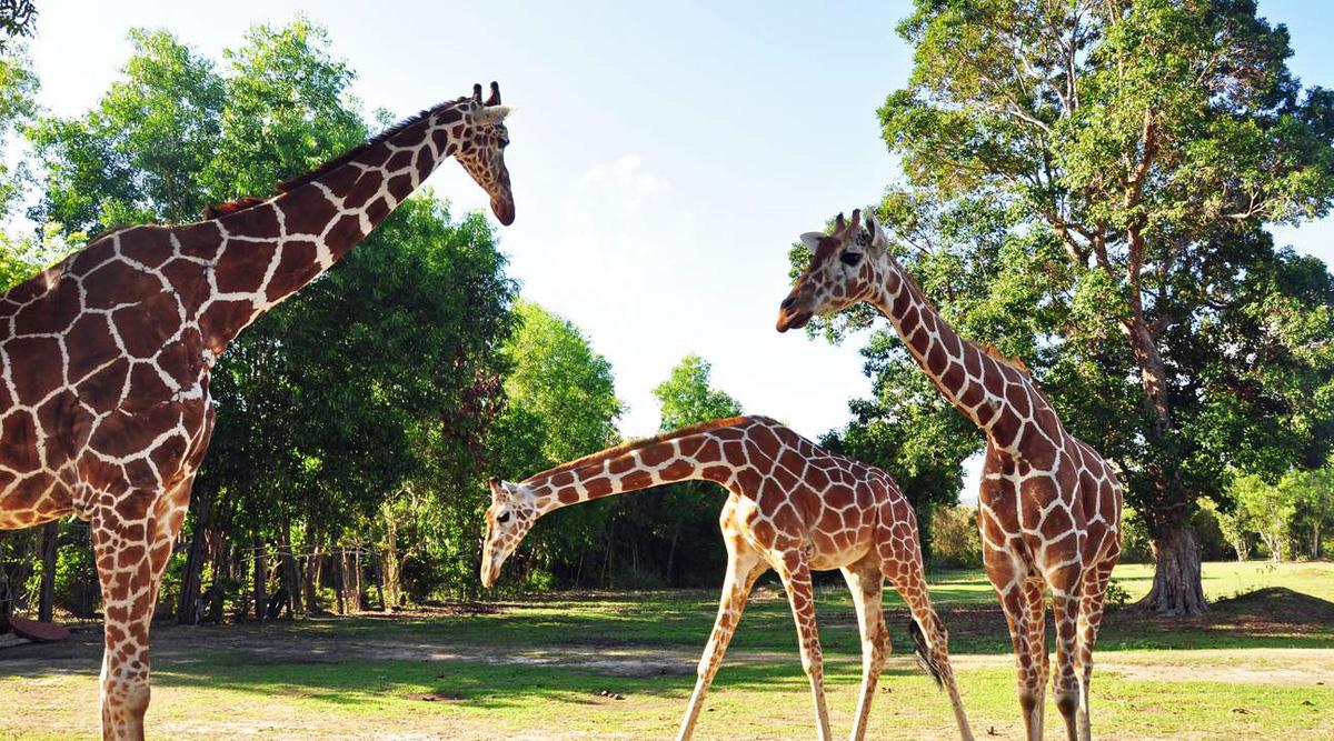 Coron calauit safariand beach tour with giraffes