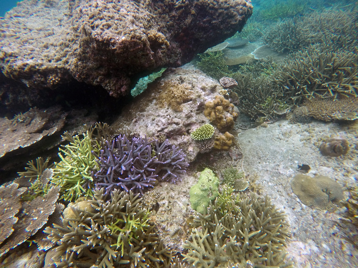 corals_diving_popocan_elnido