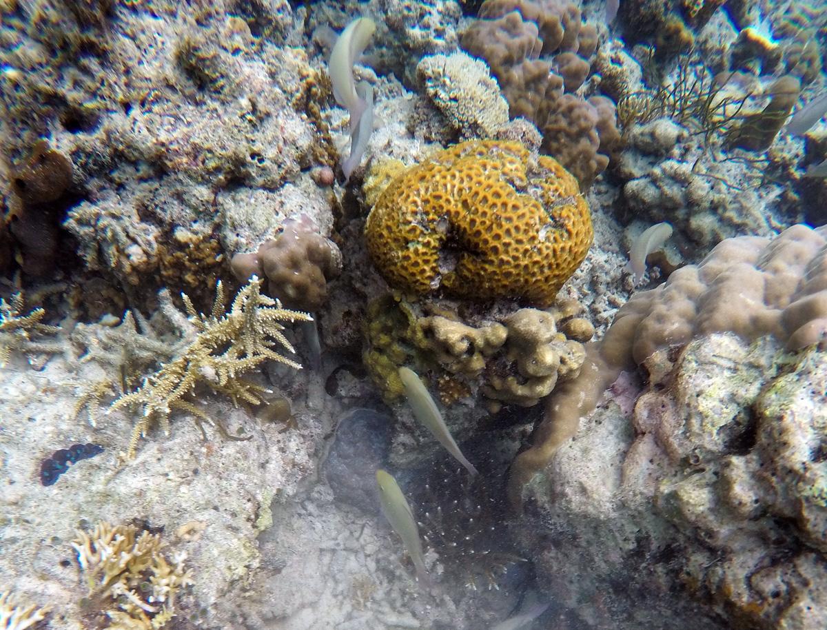 diving_entalua_el_nido_palawan