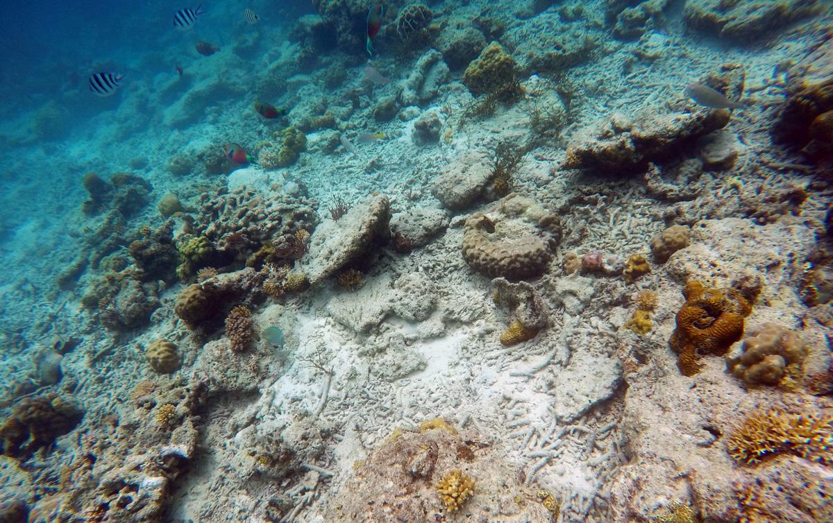 diving_snorkeling_popocan_elnido_palawan