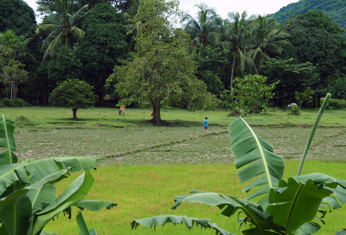 green nature el nido