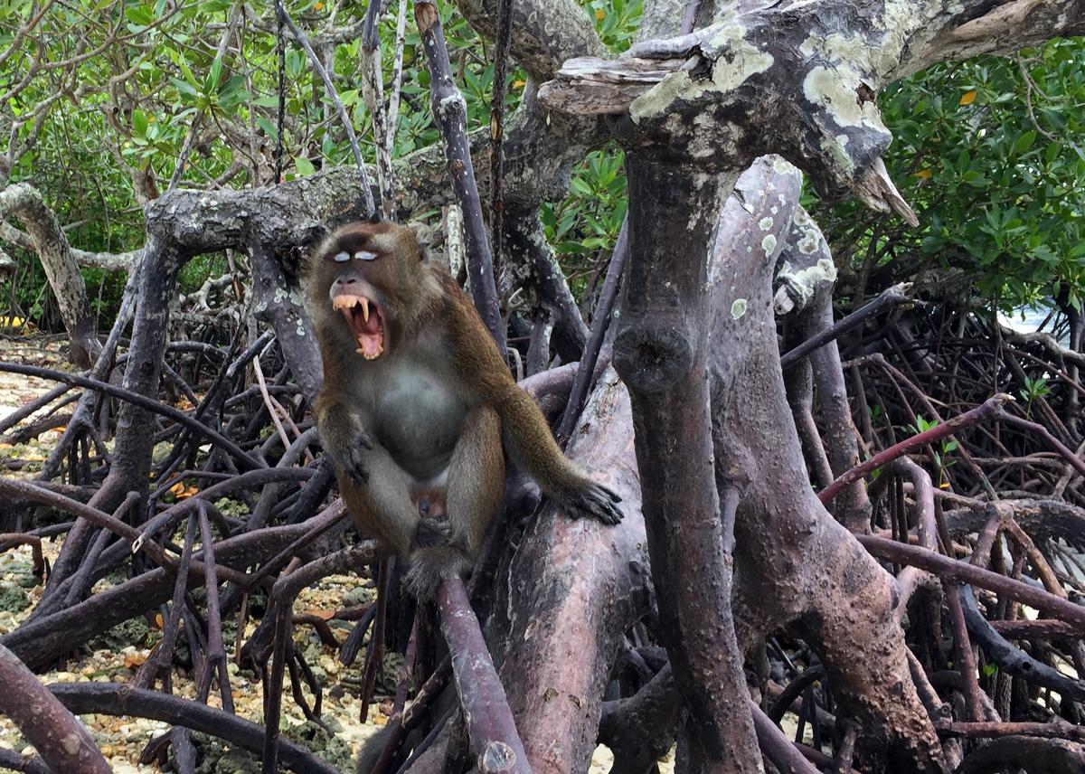 monkey_snake_island_palawan