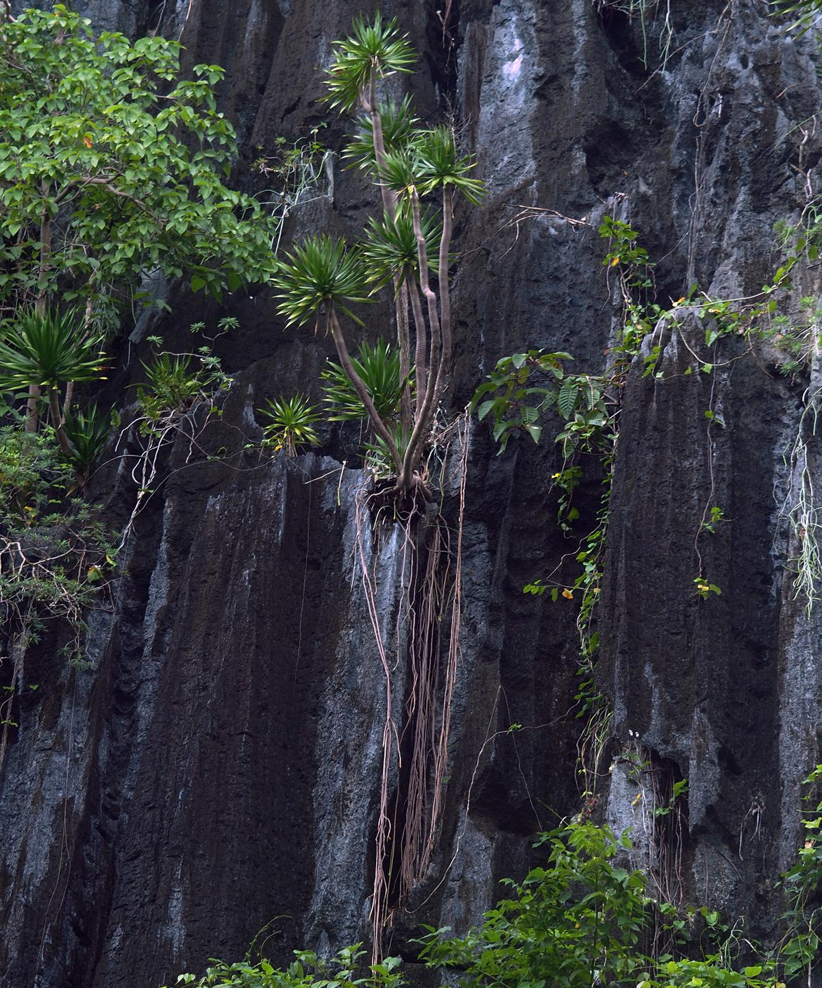 nature_pinagbuyutan_island_el_nido