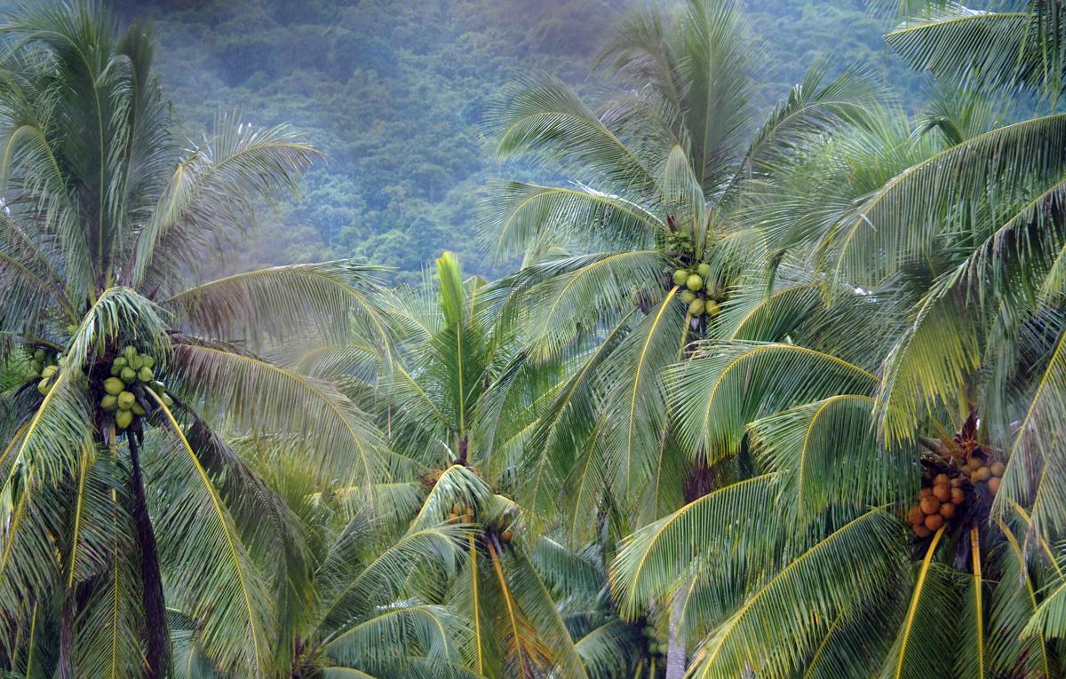 palms coco el nido