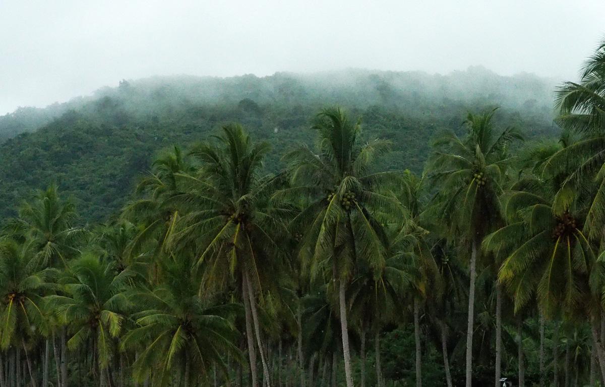 palms nakpan beach el nido
