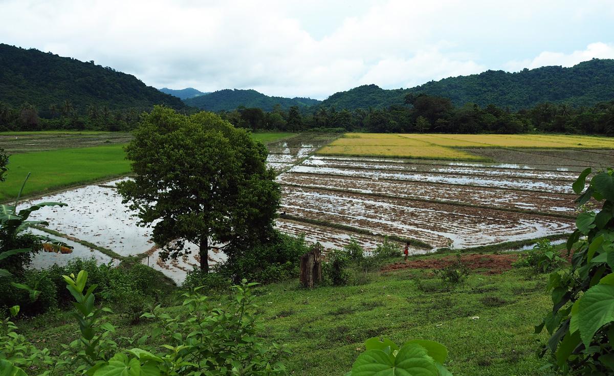rice el nido palawan