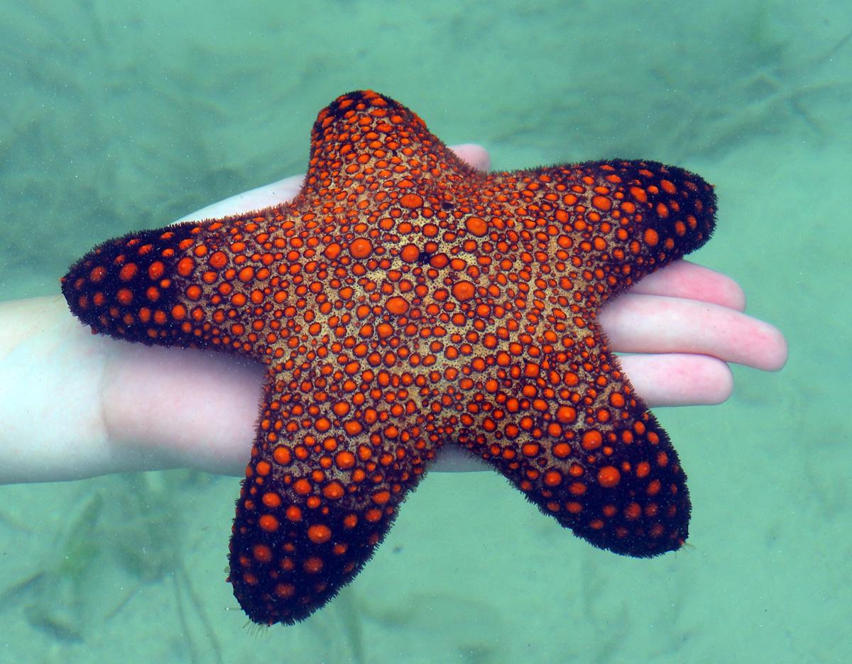 starfish_snake_island_elnido