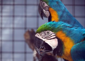 beautiful_blue_parrot_resort_moalboal_cebu