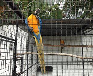 big_blue_parrot_resort_moalboal