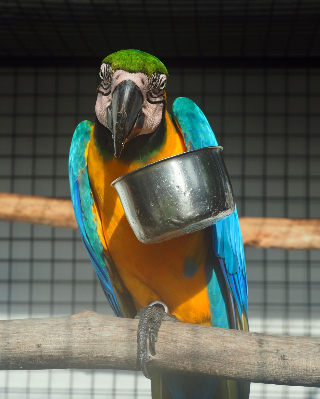 big_parrot_resort_moalboal_cebu