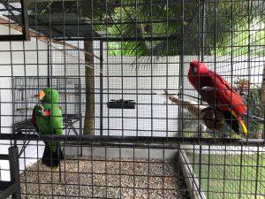 green_red_parrot_resort_moalboal_cebu