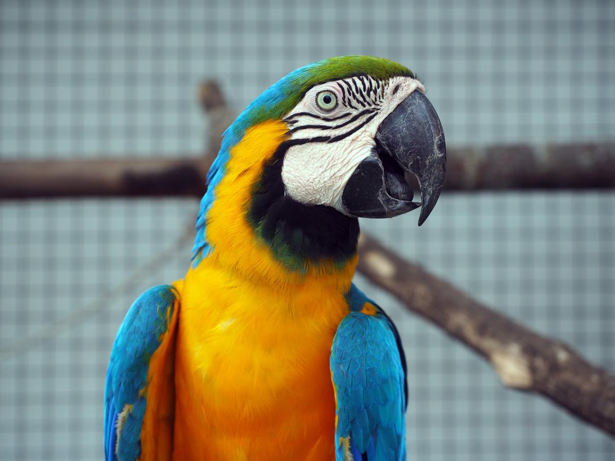parrot_resort_moalboal_cebu