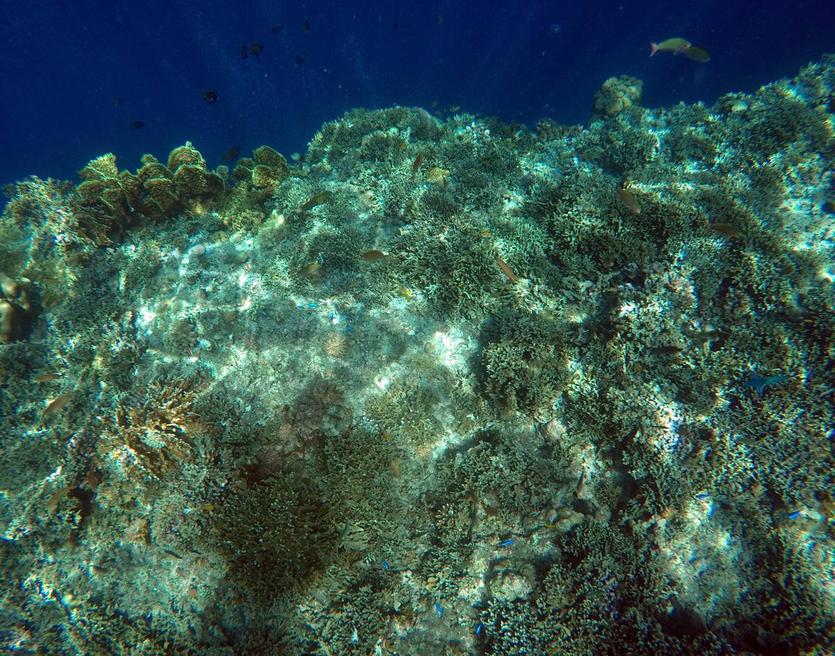 snorkeling_pangasama_moalboal_cebu