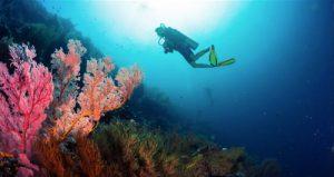 sumilon_island_day_tour_moalboal_cebu