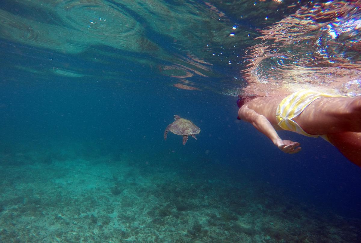 turtle_moalboal_cebu_panagsama