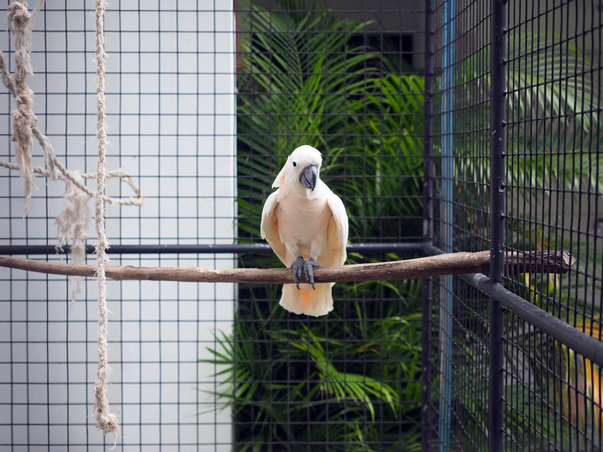 white_parrot_resort_moalboal