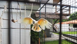 white_parrot_resort_moalboal_philippines