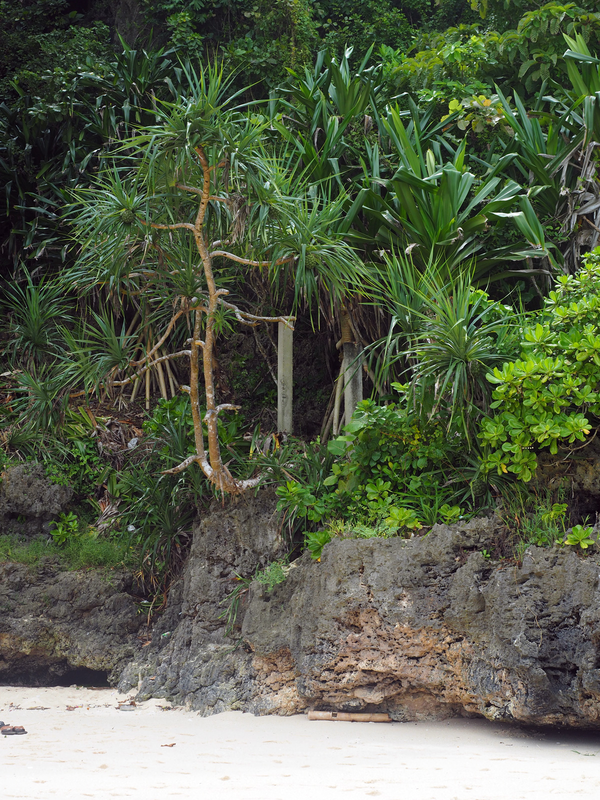 boracay_nature_photo