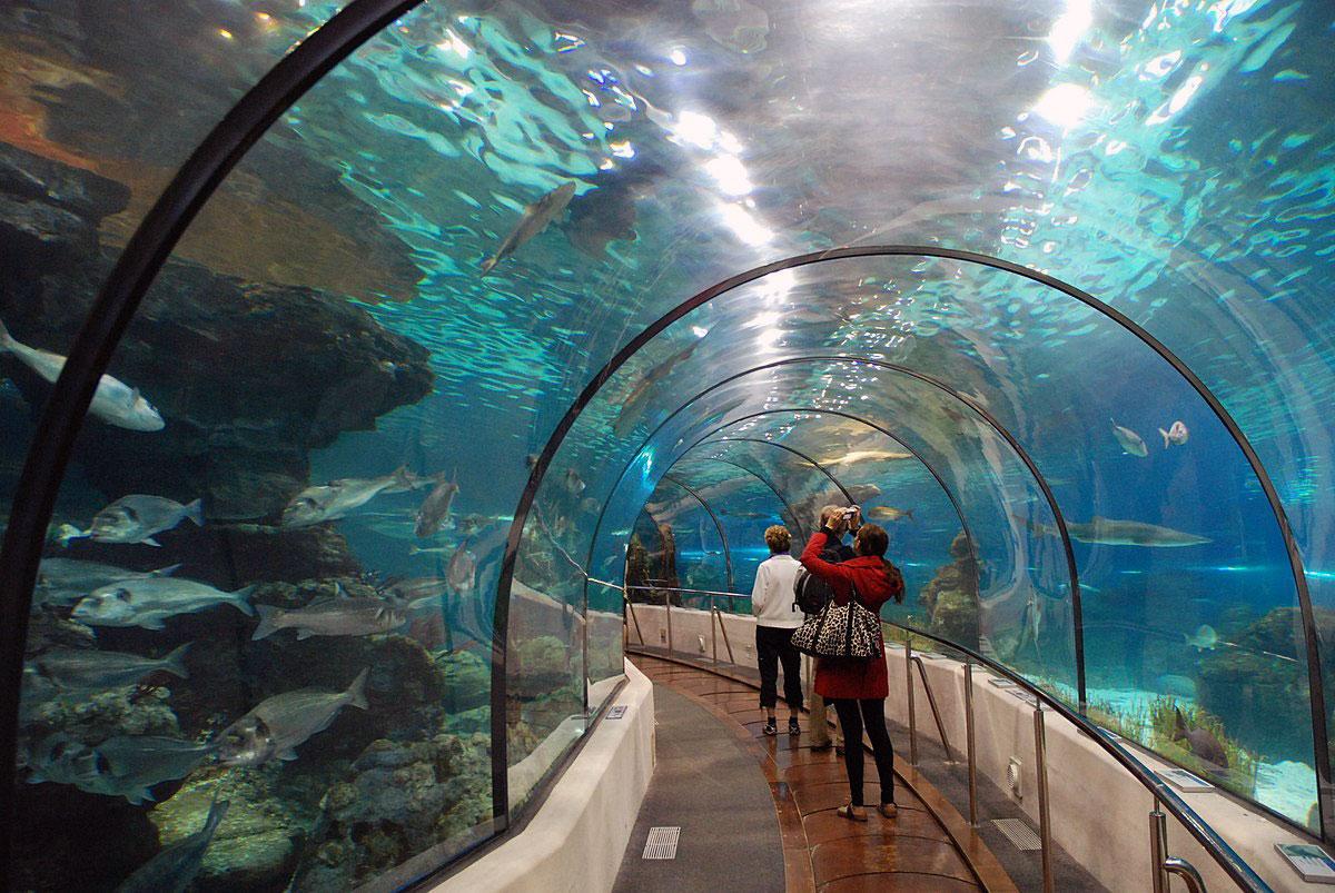 barcelona_aquarium