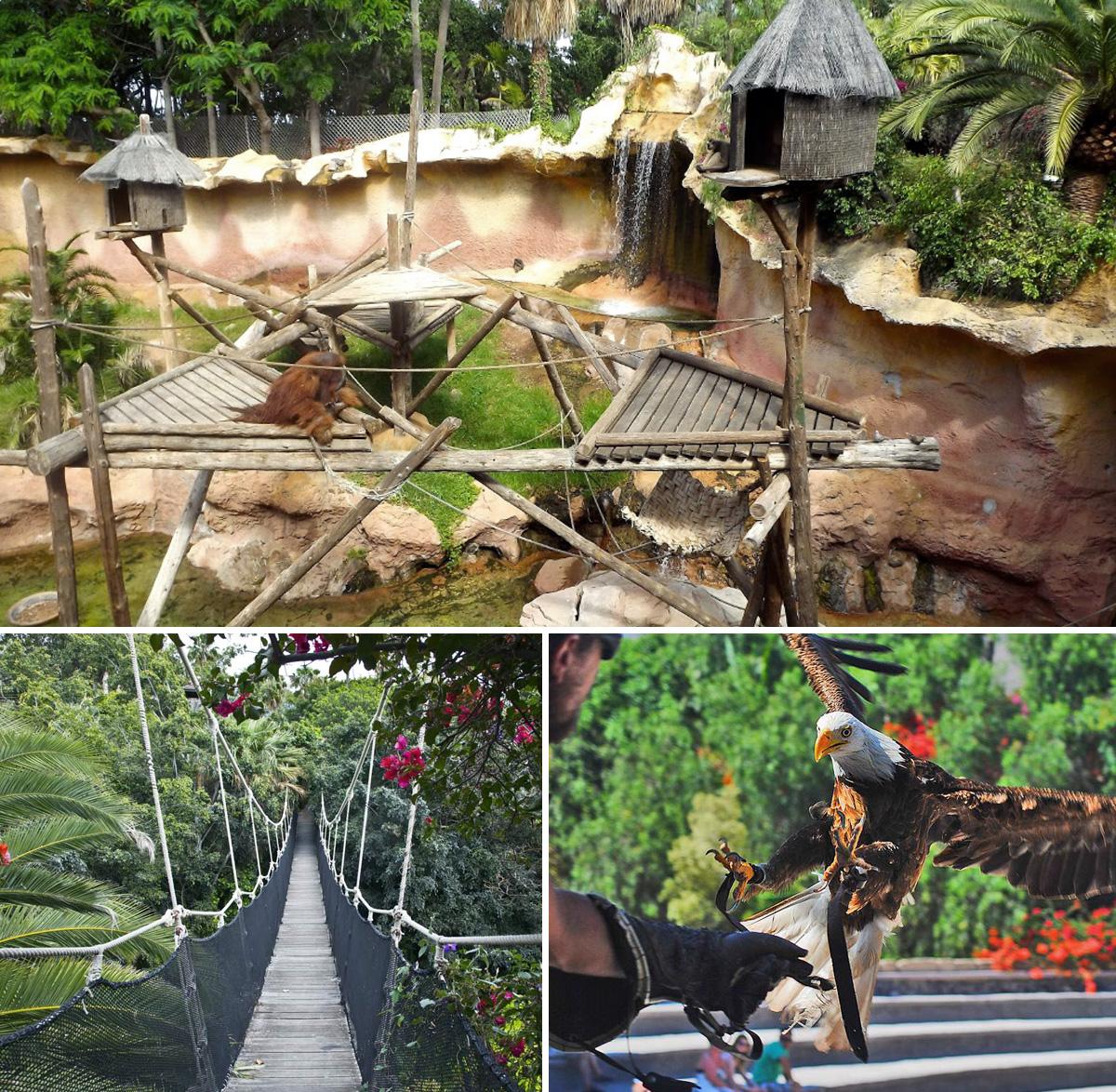 jungle_park_tenerife