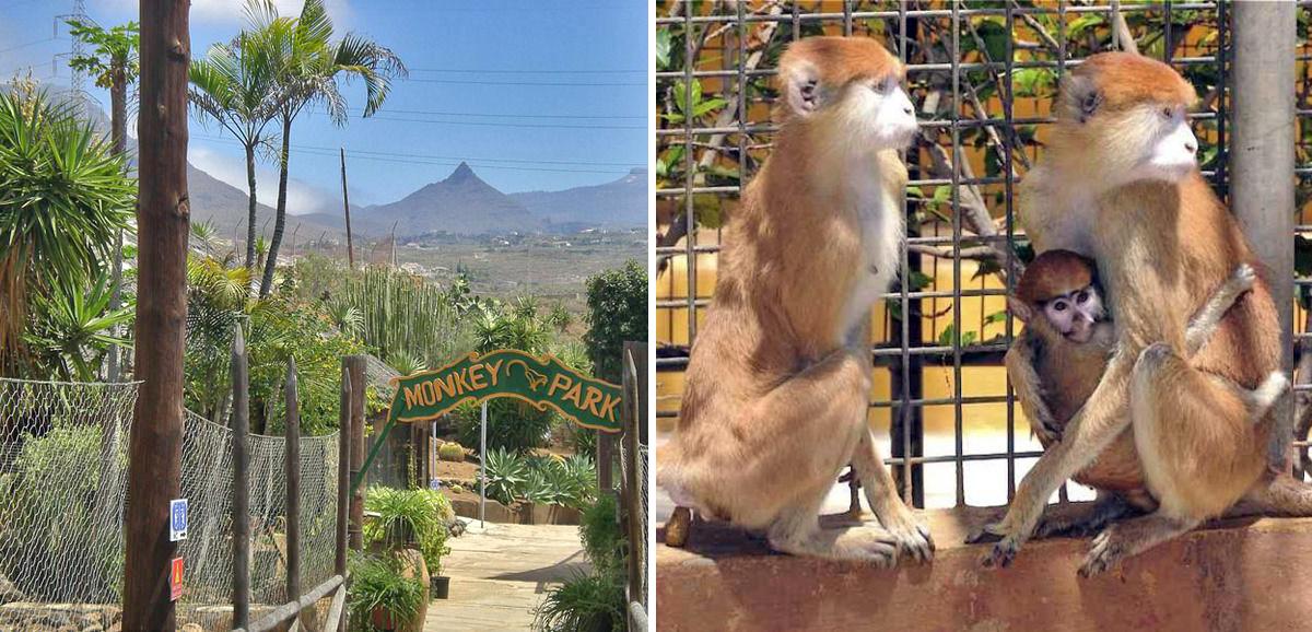 monkey_park_tenerife