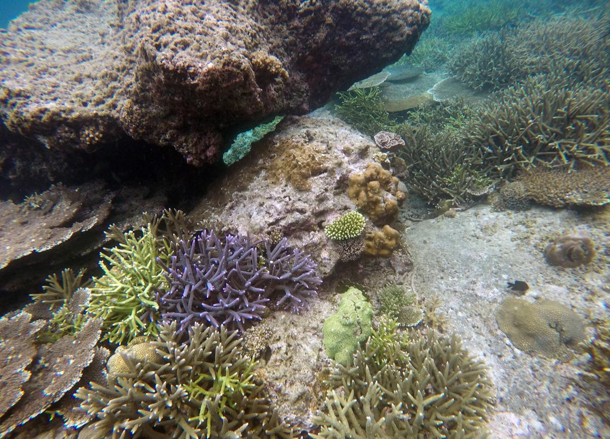 Diving Bohol Panglao
