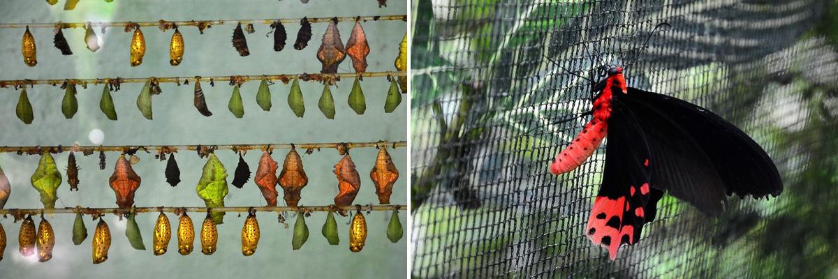 habitat_butterflies_conservation_center_bohol